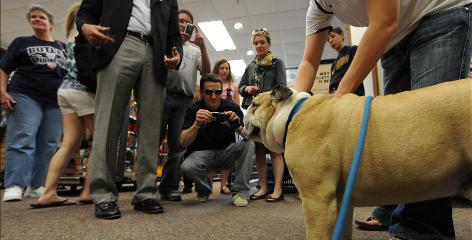 Blue II, Butler's bulldog mascot, is swarmed by fans wanting a picture during a visit to the campus bookstore Sunday, a day before the school's basketball team plays Duke in the national title game just 6 miles down the road at Lucas Oil Stadium.