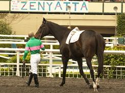 Zenyatta, seen here walking wtih Jockey Mike Smith around the track during a retirement ceremony at Hollywood Park in Inglewood, Calif. in December, became the queen of racing with 19 wins in 20 starts and a record $7.3-million in earnings.