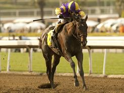 Premier Pegasus, with jockey Alonso Quinonez aboard, won the Grade II, $250,000 San Felipe Stakes, Saturday at Santa Anita Park.