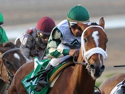 A victory in the Risen Star Stakes, above, has helped vault  Mucho Macho Man, foreground center, up the list of Kentucky Derby contenders. The Run for the Roses is May 7.