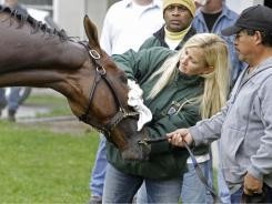 Kathy Ritvo towels off Derby hopeful Mucho Macho Man at Churchill Downs on Monday as Jose Martinez holds the horse.