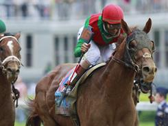 Veteran jockey John Velazquez earned his first Kentucky Derby win in 13 tries by getting the ride aboard Animal Kingdom. 