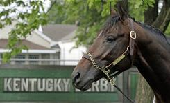 Nehro looks on at Churchill Downs in May. The Kentucky Derby runner-up will not run in the Preakness.