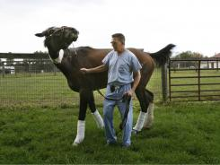 Dean Richardson hand-grazes 2006 Kentucky Derby winner Barbaro in 2006. Barbaro died in 2007 due to complications from an injury he suffered racing the 2006 Preakness.
