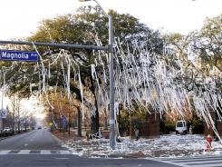 Crews work to remove toilet paper from the two poisoned oak trees before spraying the leaves with a coating at Toomer's Corner in Auburn, Ala., on Feb. 17, 2011.