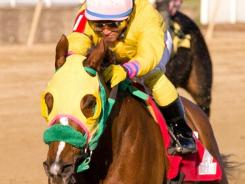 Rapid Redux, with jockey J.D. Acosta aboard, won his 19th in a row at Laurel Park in October.