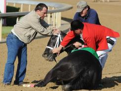 Eight Belles was euthanized after breaking both front ankles following a second-place finish in the 2008 Kentucky Derby. A horse-racing fatality database will be made available by several tracks.