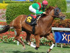 Animal Kingdom, ridden by John Velazquez, won his last race at Gulfstream Park on Feb. 18.
