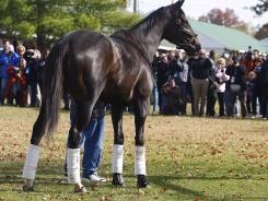 Zenyatta, pictured in November 2010, gave birth to a colt sired by 2006 Preakness winner Bernardini.