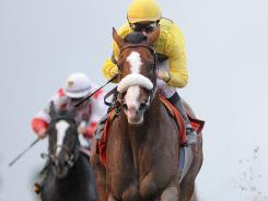 Union Rags, ridden by Julien Leparoux, won the Fountain of Youth at Gulfstream Park on Feb. 26.