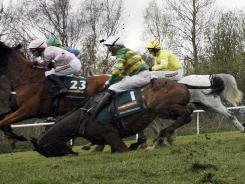 Pre-race favorite Synchronized - ridden by Tony McCoy - stumbles after jumping Becher's Brook during the Grand National at Aintree Racecourse. Synchronised suffered a broken leg and was put down, one of two horses euthanized at the Liverpool event.