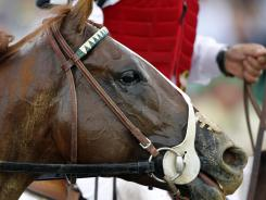 I'll Have Another is trying to become the first horse since Big Brown in 2008 to win back-to-back legs of the Triple Crown.