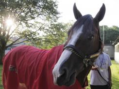 Union Rags grazes in Belmont Park on Thursday.