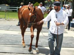 Horse trainer Doug O'Neill walks Triple Crown hopeful I'll Have Another during a press conference to announce the colt has been retired and won't run in the Belmont Stakes.