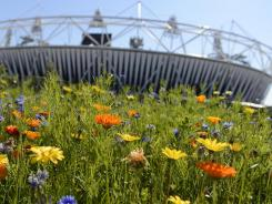 Wildflowers outside Olympic Stadium are part of an effort to lure all kinds of wildlife back to the Olympic Park.