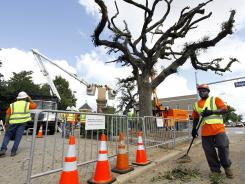 Crewmen work Wednesday near the three live oaks on Toomers Corner on the Auburn University, after pruning large portions of the beloved tree to remove weakened branches.