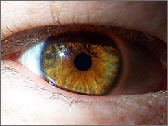 A hazel eye: greenish gold, much like reader Christine Bourquin's eyes.