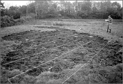 """This 1989 photo from France's space agency CNES shows an investigator inspecting the site known as """"Le trou normand"""" -- or the Norman hole -- where there are allegedly traces left by a UFO."""