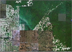In this image from Google Earth software, the Surui Indians' reservation is seen in Rondonia, Brazil.  The tribe is linking up with the search giant  to capture vivid images that could help stop loggers and miners from deforesting the jungle.