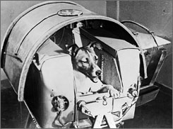 The dog Laika, the first living creature ever sent in space, onboard Sputnik II. Laika died a week after launch from stress and overheating, likely due to a malfunction in the thermal control system.