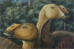 An artist's rendering shows the Gryposaurus monumentensis, or duck-billed dinosaur.