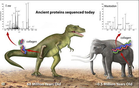 Using genetic sequencing, scientists have conclusively linked the dinosaur T. rex with birds and the mastadon with modern elephants.