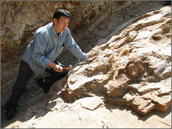 Xu Xing examines the fossil area of a 49-foot, planteating Sauropod, partially uncovered in northeast China?s Liaoning province, a rich hunting ground for fossils.