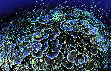 In this photo released by U.S. Fish and Wildlife Service, coral is seen off Jarvis Island, one of seven islands strung along the equator in the central Pacific Ocean.