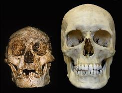 Image of LB1 &quot;Hobbit&quot; skull, as compared to a modern human skull.