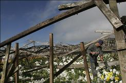 A worker salvages wood from damaged green houses on American Flower Corp's plantation which was destroyed in an earthquake in Fraijanes, Costa Rica, Jan. 29, 2009.  The 6.1-magnitude earthquake on Jan. 8, 2009 caused over $600,000 in damage at America Flower Corp, according to Manager and co-owner Michael Thomas. The earthquake changed the landscape in central Costa Rica, killing at least 23 people and causing a total of at least $100 million in damage.