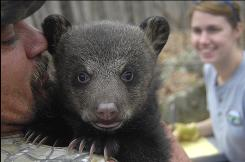 In this Tuesday, March 10, 2009 photo,  Ray Young, of Dover, Ark., holds black bear cub, as A.J. Riggs, right, with the Arkansas Game and Fish Commission, looks on in the Ozark National Forest near Dover, Ark.