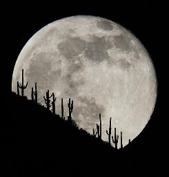 The first full moon of December 2009 raises over a stand of saguaro cacti on a ridge line east of New River, Arizona. A &quot;blue moon&quot; (which is the second full moon in the same month) will occur New Year Eve, December 31st, 2009.