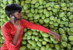 In this photo taken on April 18, 2009, an Indian farmer talks on his mobile phone as he rests on a pile of mangoes at the Gaddiannaram fruit market in Kothapet, located in the outskirts of Hyderabad.