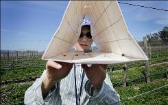 Monica Cooper, a viticulture farm advisor, checks a trap and finds two male European grapevine moths in a vineyard in Oakville, Calif.