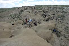 A fossil bed in southwestern Wyoming has yielded a motherlode of early mammal fossils for paleontologist Robert Anemone and colleagues. 