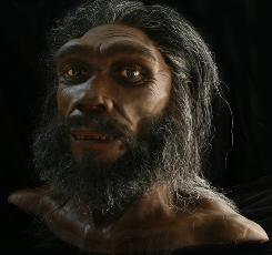 Some experts believe the homo heidelbergensis species might be the Denisova cave hominid.