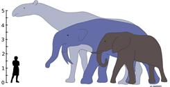 This diagram provided by the journal 'Science' shows the largest land mammals that ever lived, from left, Indricotherium and Deinotherium, that would have towered over the living African Elephant. Indricotherium.