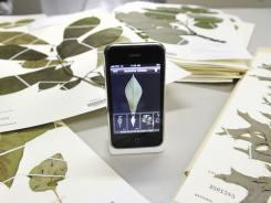 The Leafsnap app on display on an iPhone along with tree leaf specimens.