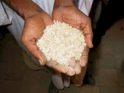 High grade frankincense tears at Gum Company, Keren Eritrea.