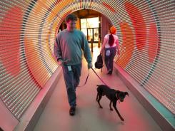 A Zynga employee walks through the 'time tunnel' with his pet dog inside the company's new headquarters in San Francisco.