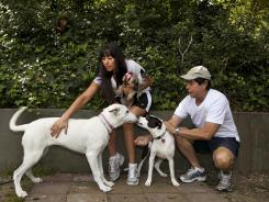 DogVacay host and home owner Tracie Sorrentini, left, holds her small dogs, Punky, left, and Puccini, as her father Irving Sorrentini helps with hosted dogs, Yuki, left, and Lexi, right, at her Paw Hills pet resort in Los Angeles.