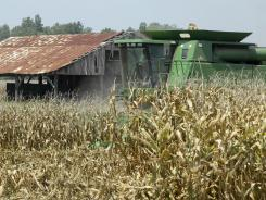 Corn being harvested on a farm near Coy, Ark.