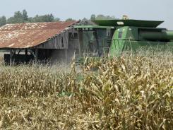 Corn being harvested on a farm near Coy, Ark.