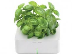"Click and Grow's indoor gardening ""smart pots"" are designed to help urbanites bring some of Mother Nature's bounty indoors."