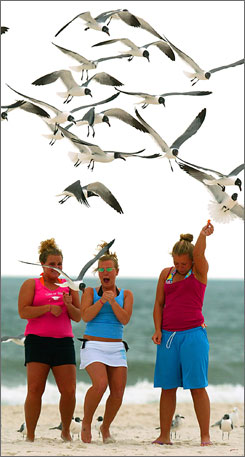 Wild times: College students feed seagulls on the Gulf State Park Public beach in Gulf Shores, Ala.