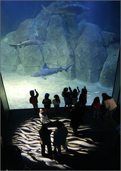 Celebrate Shark Week: Adventure Aquarium in Camden, N.J., is among those with special events planned.