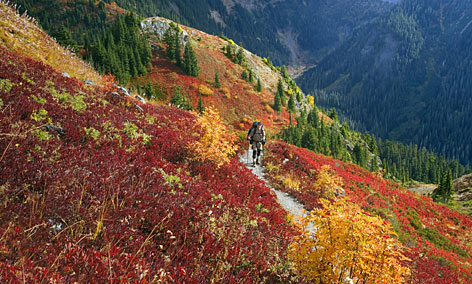 Need to stretch your legs? On your way down the Mount Baker Highway, stop and take a stroll on the Yellow Aster Butte Trail.