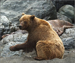 A forbidden zone now open: Abercrombie & Kent offers a 15-night trip to Siberia. The adventure includes a visit to the Chukotka Peninsula, known for its large population of brown bears.