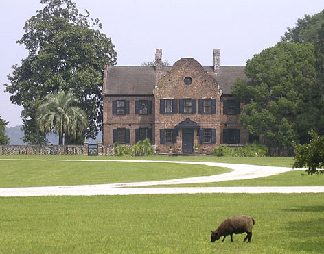 The Middleton Place plantation in South Carolina recently acquired two young water buffalo for it's stable yards. Middleton was the first place in the United States to use water buffalo to work the rice fields before the Civil War.
