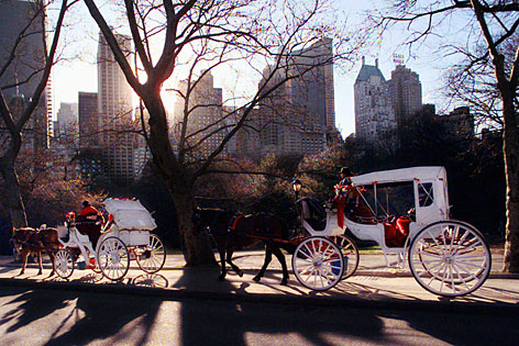 Horse-pulled carriages roll through New York's Central Park.
